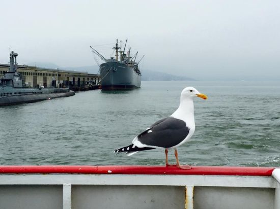 A lone sea gull, photograph caught by winna, a pretty little lady from Guangzhou